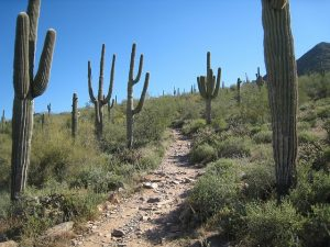 Arizona hiking trail